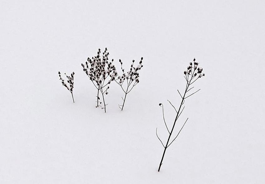 En el corazón del invierno