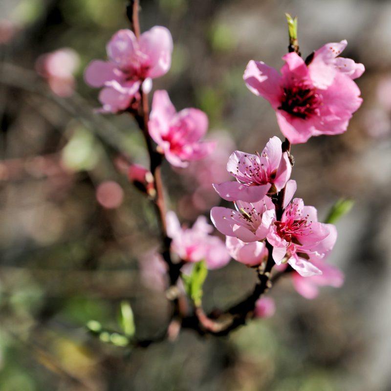 Haikus de primavera I